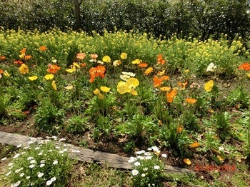 春の花ばな3.jpg
