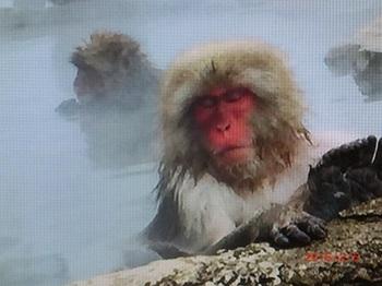 気持がよさそうに入浴する猿.jpg