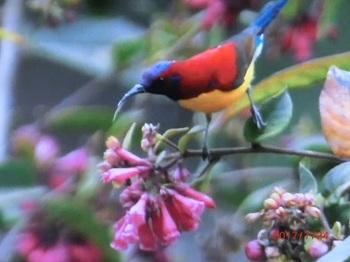色鮮やかな鳥?.jpg
